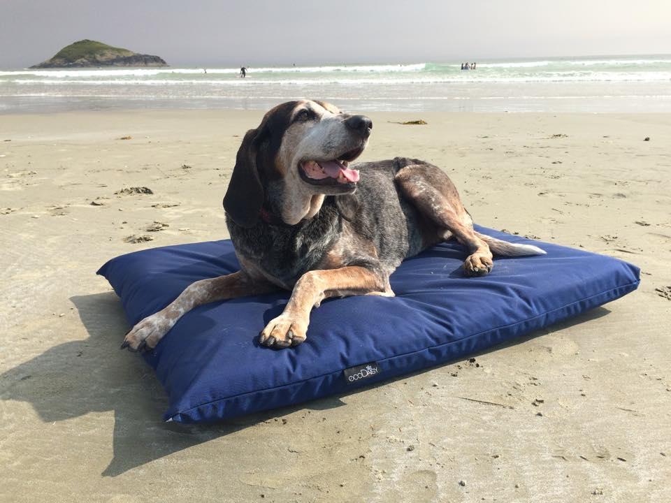 Replacement Dog Bed Covers, Waterproof Outdoor Dog Bed Canada