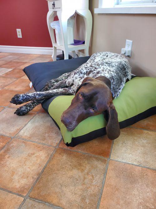 Henry on new bolster bed